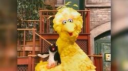 4038 Big Bird and Shivers the Penguin
