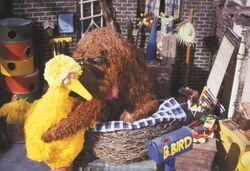 Follow That Bird hug nest.jpg