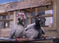 Letters-pigeons