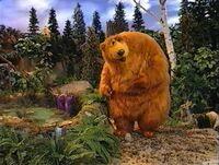 Bear207h