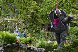 WandChase-ElephantPond.jpeg