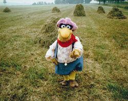 Follow That Bird Finch field.jpg