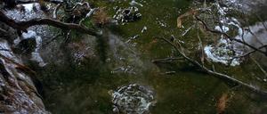 Bog of Eternal Stench 01.png