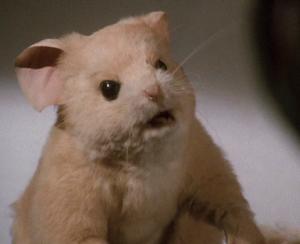 Luke as Mouse