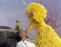 Kiss big bird uggams