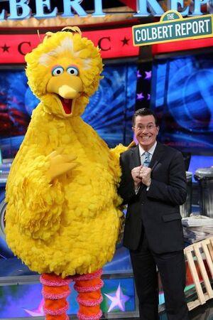Colbert-BigBird.jpg
