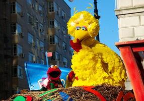 Macy's thanksgiving parade elmo big bird nothing