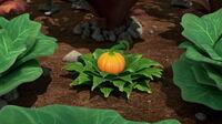 324 Oh My Gourd 08
