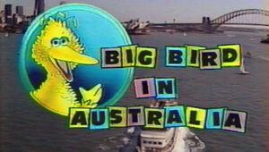 Big Bird in Australia.jpg