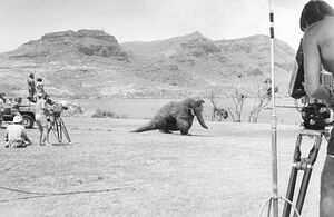 Filming Snuffy in Hawaii.jpg