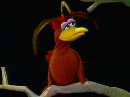 Harvey (bird)
