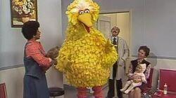 1339 Big Bird's Doctor