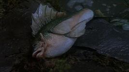 TS-Salmon
