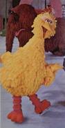 Bigbirdstandfollies