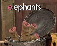 Oscarselephants