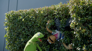 MuppetsNow-S01E01-Hedge.png