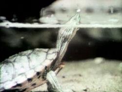 2529-Turtle.jpg