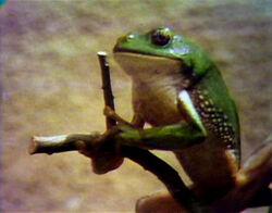 Song.frogstruggle.jpg