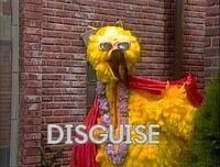 Bigbird-disguise