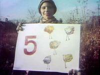 Chicken Five