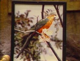 2079-Parrot