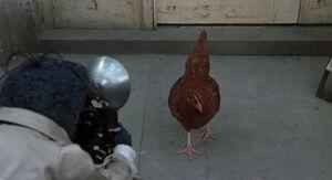 GMC-Chicken.jpg