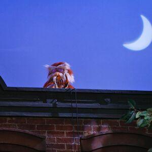 Hoots moon.jpg