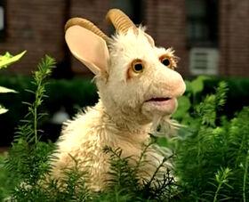 Lassie-Goat.jpg