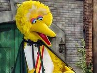 Count Big Bird 3797