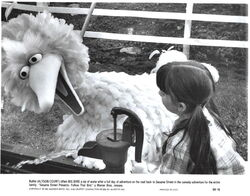 Follow that bird photo 3.jpg