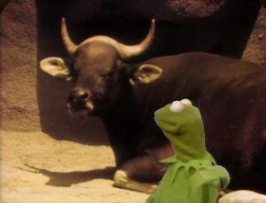 Kermitlecture--Horns.jpg