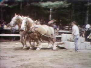 Horses pull cement.jpg