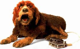Storyteller's Dog.jpg