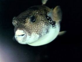 Prettyfish-refilm.jpg