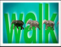 Song.Walk