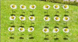 18-Flowers