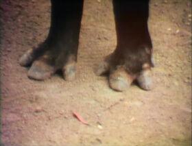 Raposo-Feet.jpg
