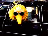 Sesame Street - The Movie