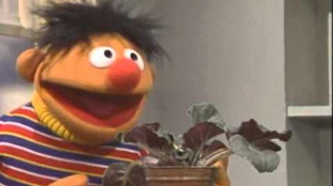 Sesame_Street_Little_Plant_Song_With_Ernie