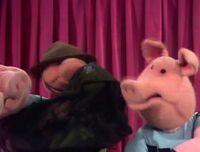 224 pigs take over.jpg
