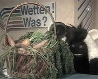 Wettenwas-carrots.jpg