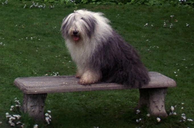 Merlin (dog)