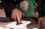 307 Suspect Monkey