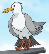 Seagull normal
