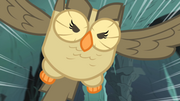 300px-Owlowiscious saves the day S1E24.png