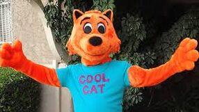 Cool Cat.jpeg