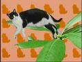 Elmo's World Cats Quiz 1