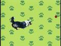 Elmo's World Dogs Quiz 7