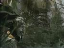 Jungle Scene.PNG