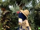 Sesame Street Grover and the Elephant Sound Ideas, BIRD, PARROT - LARGE SINGLE CALL, ANIMAL (4)